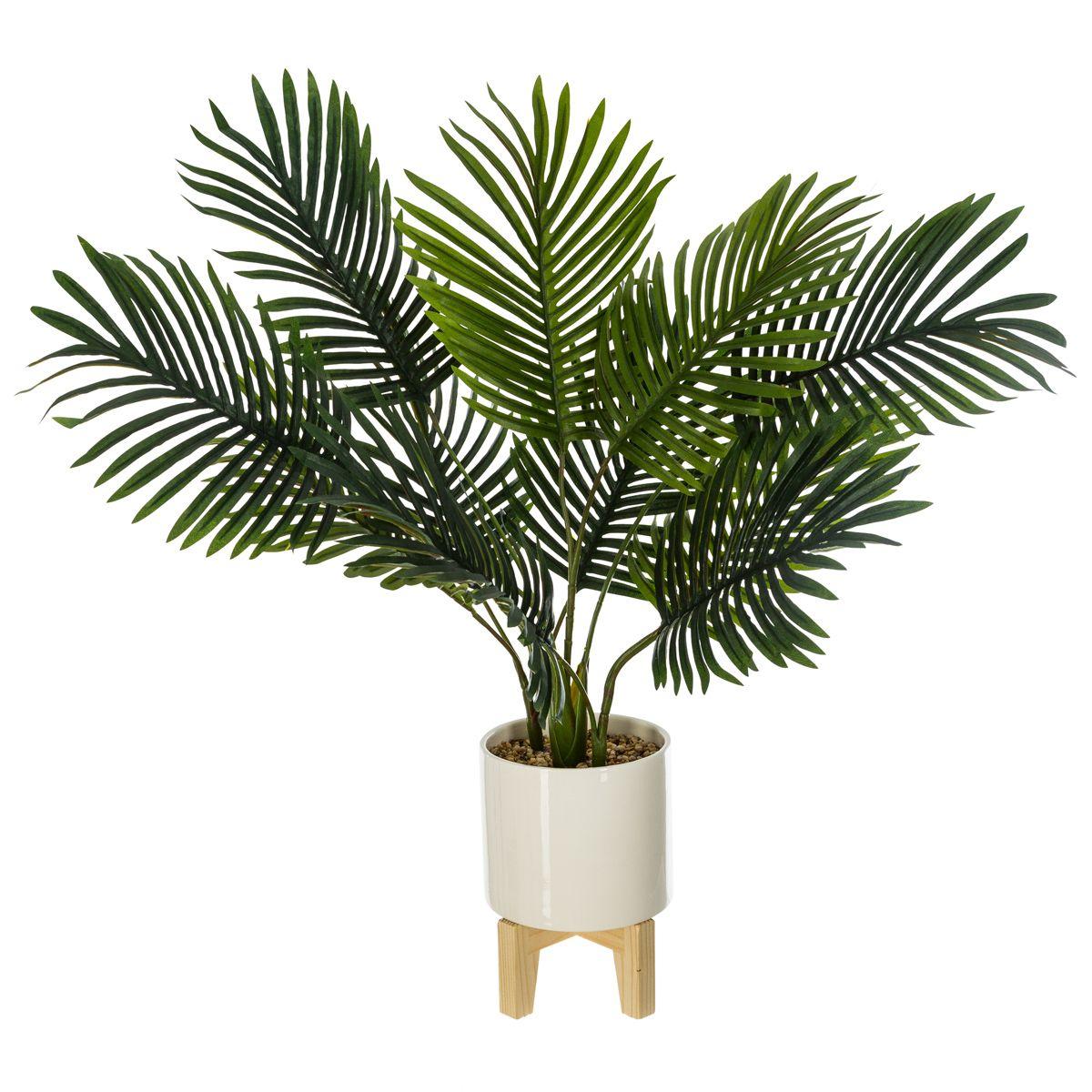 Plante pot palmier sureleve